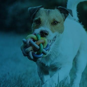 Pet Supplies Case Study
